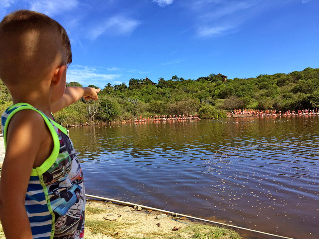 A young boy pointing at the flamingos on Necker Island