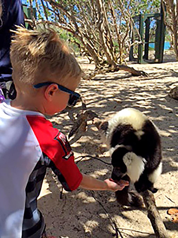 a child feeding lemurs on Necker
