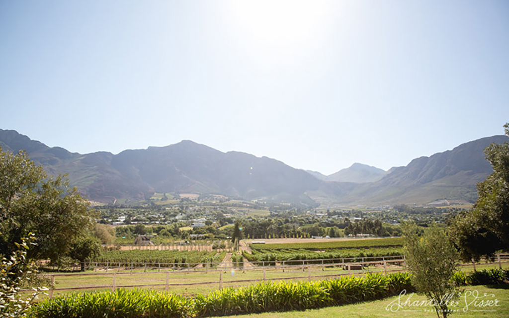 A view overlooking the vineyard's at Mont Rochelle