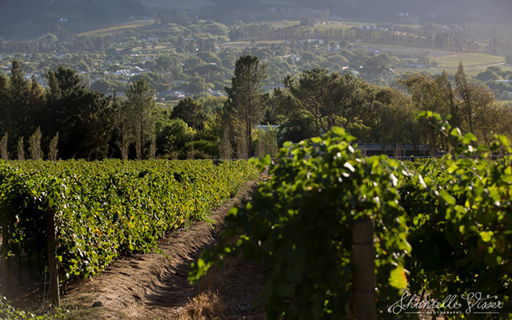 A view down in to the vineyards
