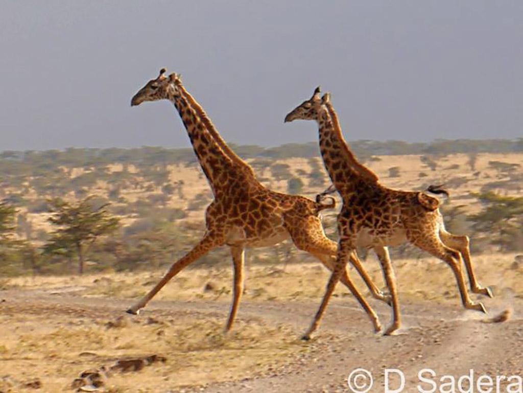 Mahali Mzuri safari sightings