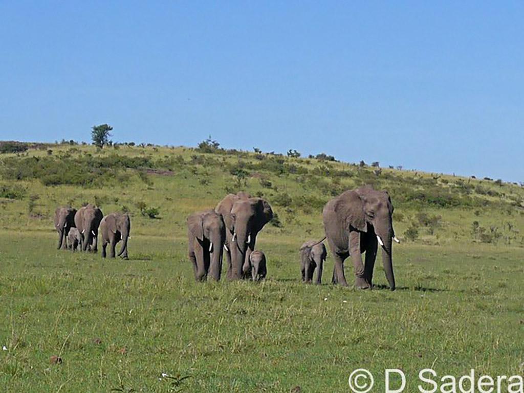 Elephants at Mahali Mzuri.