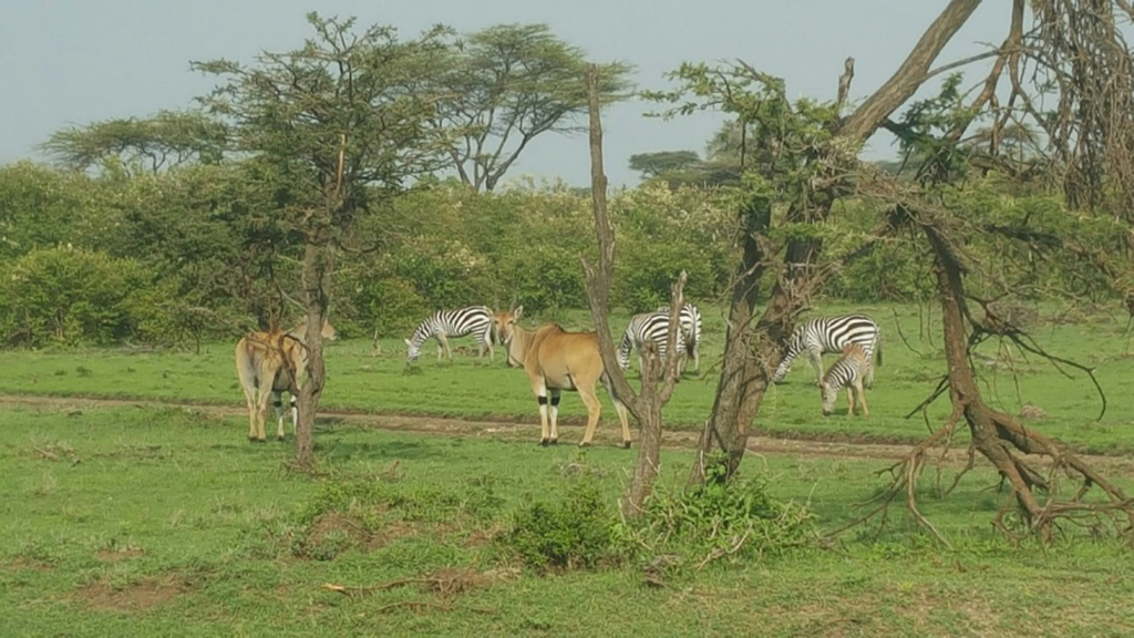 Zebra and giraffe sightings