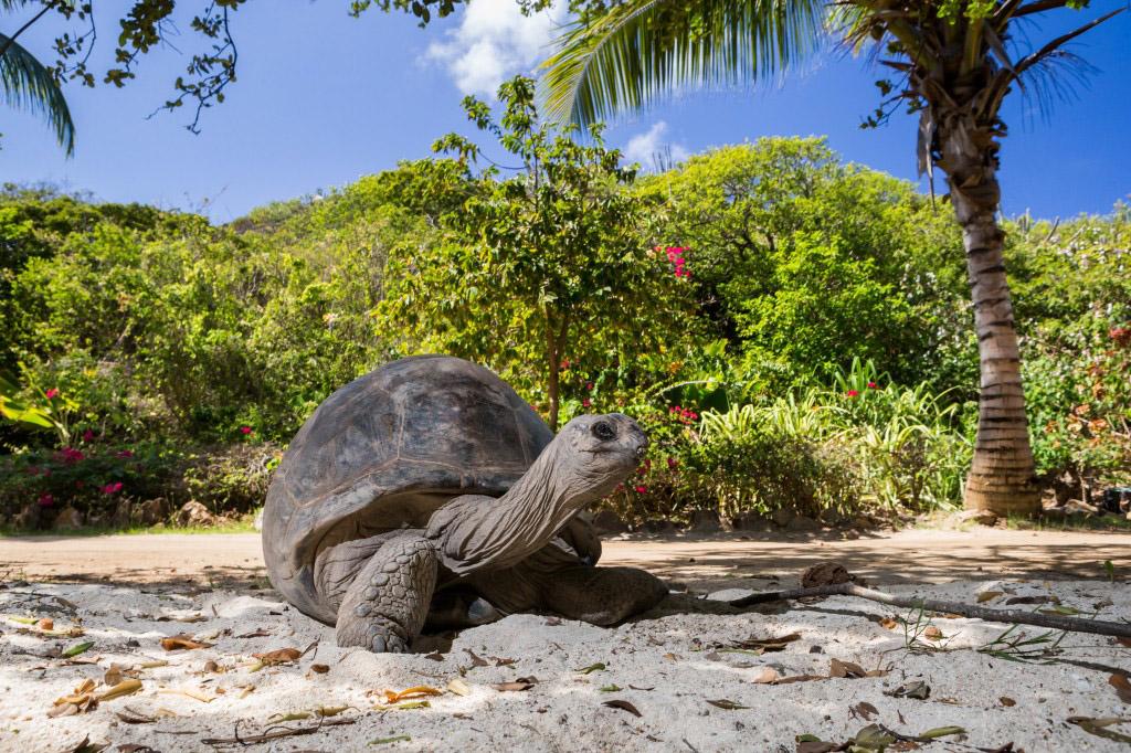 Animals on Necker Island