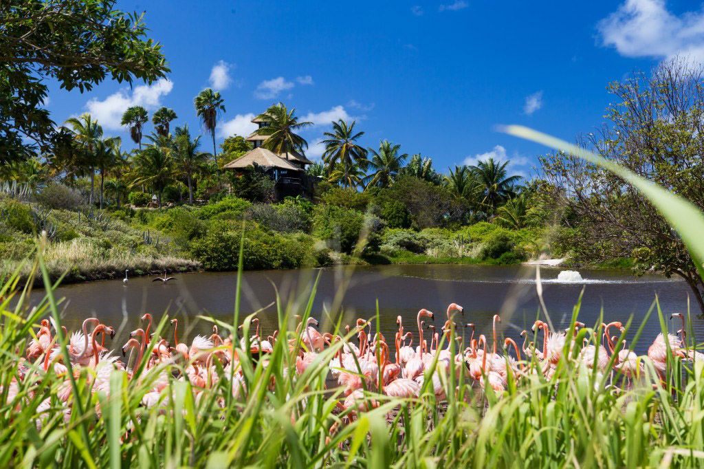 Flamingos on Necker Island