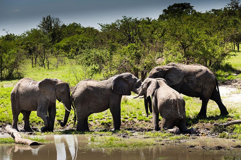 Ulusaba---Elephants