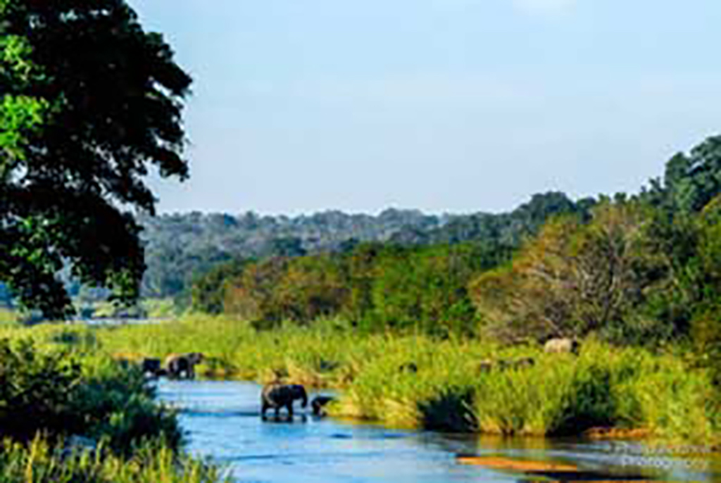 Elephants in the river near the Xikwenga Dam