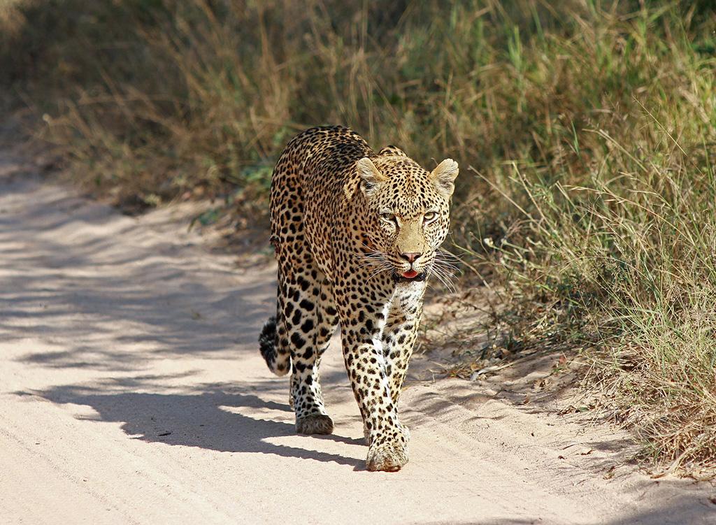 Ulusaba bush news: Guest photo diary