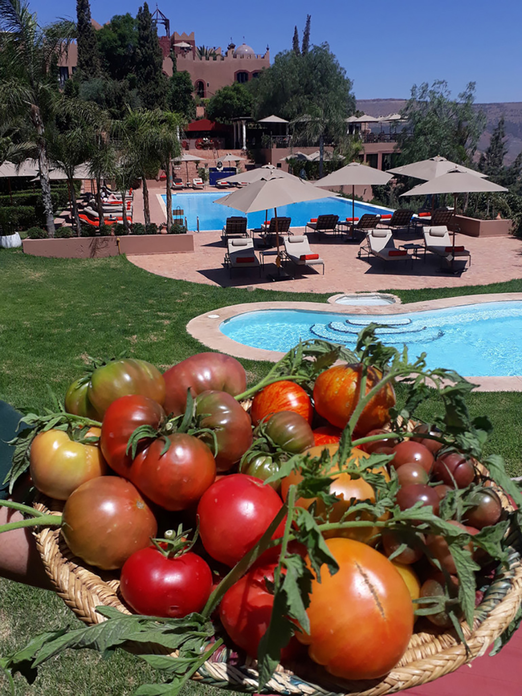 tomatoes by the pool
