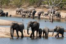 ulusaba-elephants-watering-hole.jpg